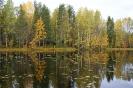 Осень лесное озеро