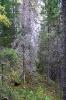лес у Андроновского водопада